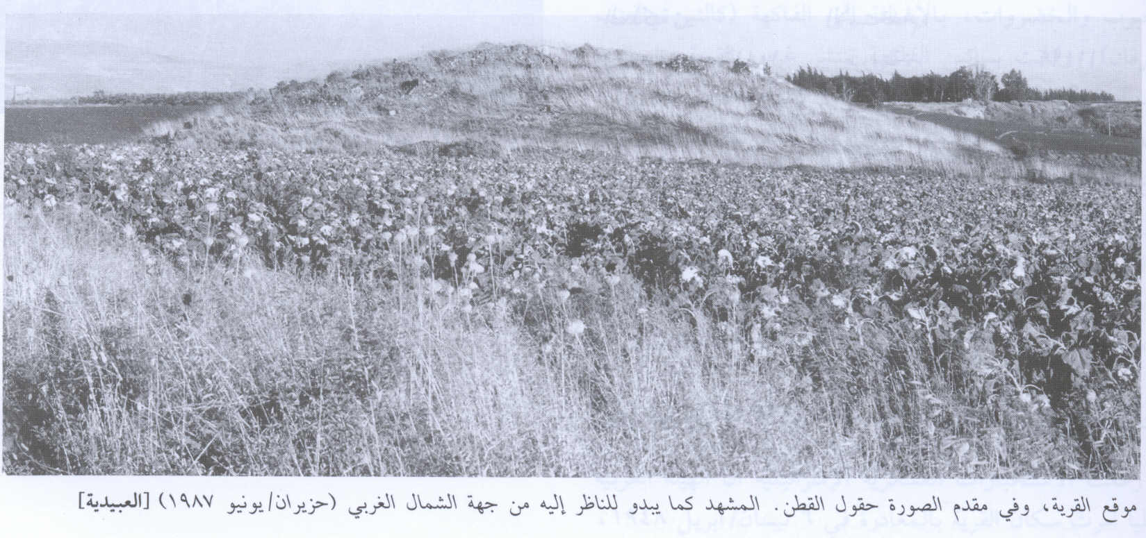 al-'Ubaydiyya - العبيدية : General view of the village site looking northwest, 1987