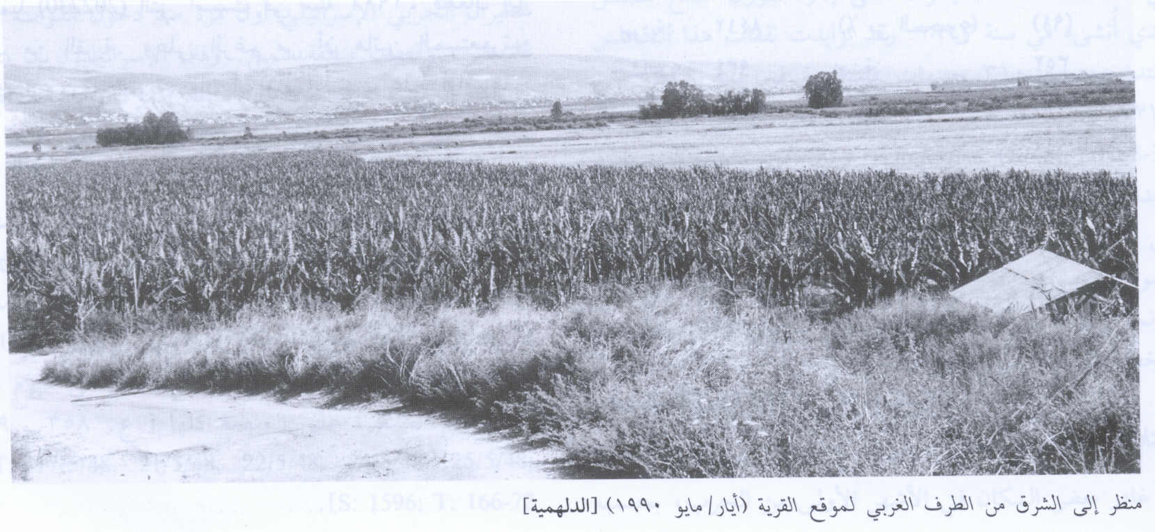al-Dalhamiyya - الدلهمية : Village Land In 1990