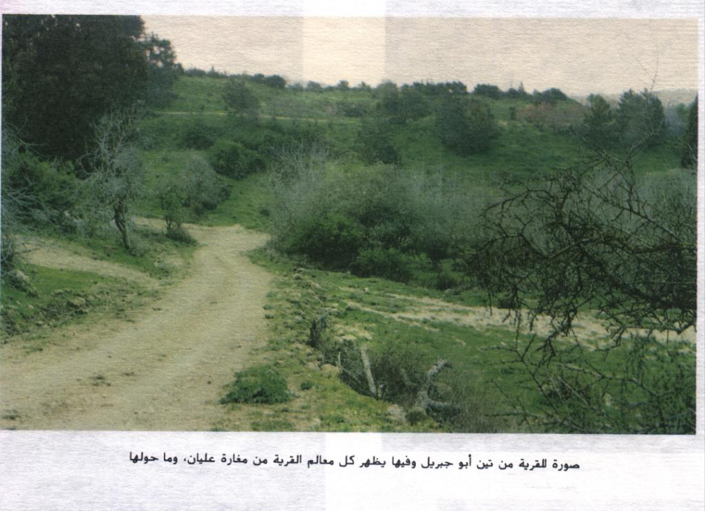 Dayr Ayyub - دير أيوب : Abu Jibril's fig fields and in it you can see Ullayan's cave
