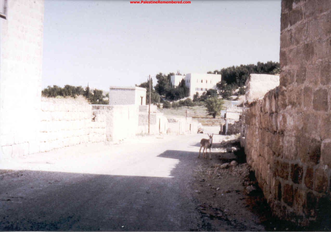 'Imwas - عِمواس : Imwas Before Destruction, Please Note the Church in the Middle Of The Picture, 1967