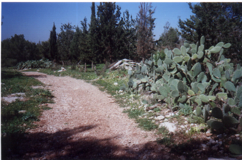 Qula - قولة : Village dirt street, some rubble, Cactus trees, March 2002